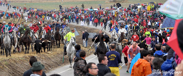 La manada se acerca al embudo flanqueada por caballistas y corredores sobre la carretera de Matapozuelos.